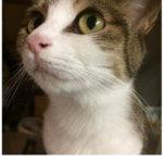 アンチノールというサプリで猫の気管虚脱の症状が和らいだ